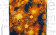 Flowers Red Yellow Blue  2 Hd Wallpaper