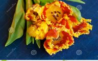 Flowers Red Yellow Blue  20 Background Wallpaper