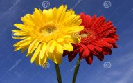 Flowers Red Yellow Blue  31 Wide Wallpaper