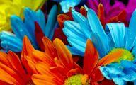 Flowers Red Yellow Blue  6 Desktop Wallpaper