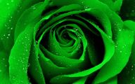 Green Flowers Hd  10 Hd Wallpaper