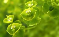 Green Flowers Hd  13 Background