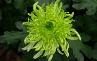 Green Flowers Hd  4 Hd Wallpaper