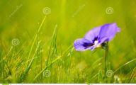 Green Grass Flowers  1 Desktop Wallpaper