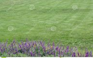 Green Grass Flowers  16 Cool Hd Wallpaper