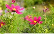 Green Grass Flowers  18 Free Hd Wallpaper