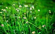 Green Grass Flowers  25 Desktop Wallpaper