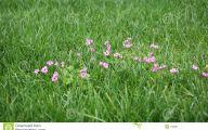 Green Grass Flowers  25 Free Wallpaper