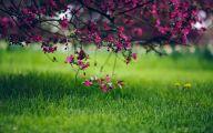 Green Grass Flowers  31 Hd Wallpaper