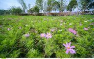 Green Grass Flowers  9 Hd Wallpaper