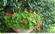 Green Hanging Flowers  27 Widescreen Wallpaper