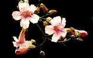 Green Hanging Flowers  32 Widescreen Wallpaper