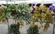 Green Hanging Flowers  34 Desktop Background