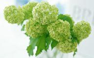 Green Hydrangea Flowers  25 Free Wallpaper