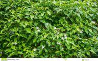 Green Leaf Flowers  1 Desktop Wallpaper