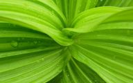 Green Leaf Flowers  17 Hd Wallpaper