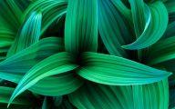 Green Leaf Flowers  19 Free Hd Wallpaper