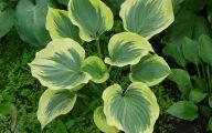 Green Leaf Flowers  28 Desktop Wallpaper