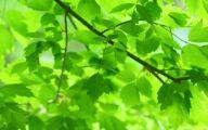 Green Leafy Flowers  41 Desktop Wallpaper