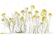 Green Long Flowers  12 Hd Wallpaper