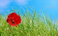 Green Long Flowers  16 Free Hd Wallpaper