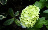 Green Long Flowers  25 High Resolution Wallpaper