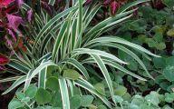 Green Long Flowers  7 Widescreen Wallpaper