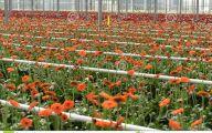 Greenhouse Flowers  1 Free Hd Wallpaper