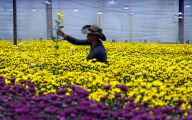 Greenhouse Flowers  10 Cool Hd Wallpaper