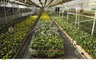 Greenhouse Flowers  13 Free Hd Wallpaper