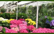 Greenhouse Flowers  17 Cool Wallpaper