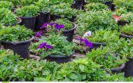 Greenhouse Flowers  2 Desktop Background
