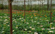 Greenhouse Flowers  24 Free Hd Wallpaper