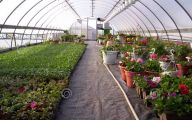 Greenhouse Flowers  32 Background
