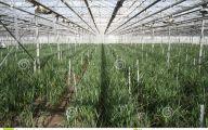 Greenhouse Flowers  35 Free Hd Wallpaper