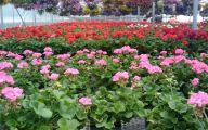Greenhouse Flowers  38 Wide Wallpaper