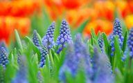 Hd Blue Flowers Wallpaper  4 Cool Wallpaper