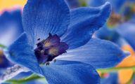 Hd Blue Flowers Wallpaper  5 Free Hd Wallpaper
