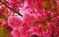 Pink Flowers Photos  5 Wide Wallpaper