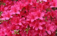 Pink Flowers Photos  7 Cool Hd Wallpaper