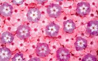 Pink Flowers Picture  12 Background Wallpaper