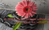 Pink Flowers Quotes  14 High Resolution Wallpaper
