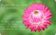 Pink Flowers Quotes  5 Desktop Wallpaper