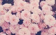 Pink Flowers Rose  1 Cool Wallpaper