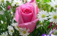 Pink Flowers Rose  4 Hd Wallpaper