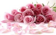 Pink Flowers Rose  5 Widescreen Wallpaper