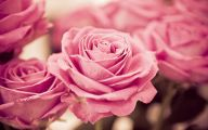 Pink Flowers Rose  6 High Resolution Wallpaper