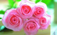 Pink Rose Flowers Images  6 Widescreen Wallpaper