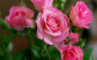 Pink Rose Flowers Wallpapers  16 Free Wallpaper
