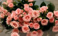 Pink Rose Flowers Wallpapers  20 Widescreen Wallpaper